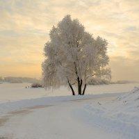 В морозной мгле :: Евгений Никифоров