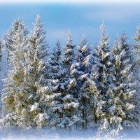 Зимний лес :: Анна Никонорова