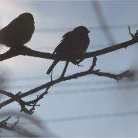 Птички :: Андрей Елисеев