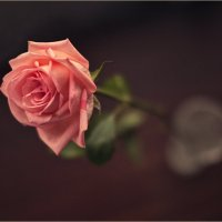 Роза :: Андрей Елисеев