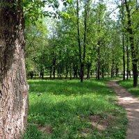 Весенний день :: ivolga