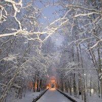 зима :: Людмила Романова