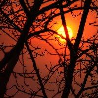 Пыльное солнце :: Mike214