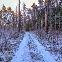 В зимнем лесу :: Vladimir