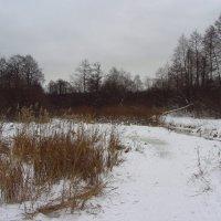 IMG_8995 - Новый 2015 год :: Андрей Лукьянов