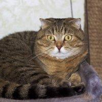 Мой котейка !!! :: Галина !!!!