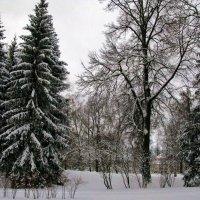 Новогодние красавицы. :: ТАТЬЯНА (tatik)