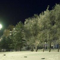 праздничные наряды деревьев :: Людмила Мозер
