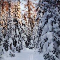 лыжня :: Андрей