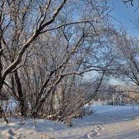 Зимний парк. :: Николай Емелин
