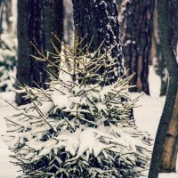 В лесу родилась ёлочка :: Александр