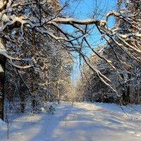 Ветвями жалуясь безлюдью... :: Лесо-Вед (Баранов)