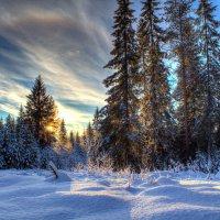 закат в лесу :: Альберт Сархатов