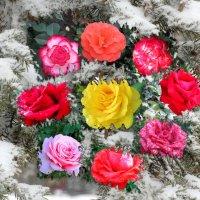 Венок из роз на снегу... :: Тамара (st.tamara)