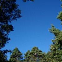 Наша крыша небо голубое :: Grey Bishop