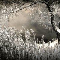 Закатная сказка уходящего декабря...3 :: Андрей Войцехов