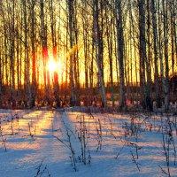 Зимний закат солнца :: Константин Филякин