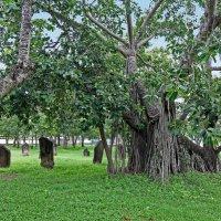 Таиланд. Кон Каен. Древние камни и старое дерево :: Владимир Шибинский