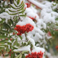 Ранний снег :: victor Lion