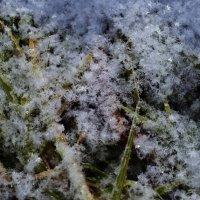 Первый снег :: Вера Андреева