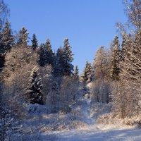 В зимнем парке :: Елена Грошева