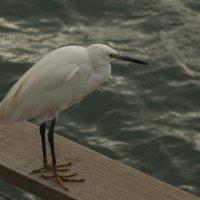 морская птица :: Адик Гольдфарб