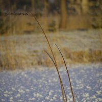 зимушка-зима... :: Андрей Герасимов