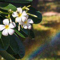 цветы и радуга :: Татьяна Исаева-Каштанова