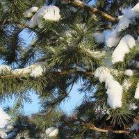 Мороз снежком укутал. :: Маргарита ( Марта ) Дрожжина