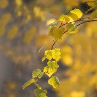Осень :: Demian