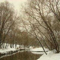 Цвета зимы :: Андрей Лукьянов