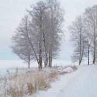 зима в Александрии :: Елена
