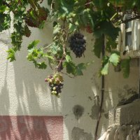 Зреет виноград :: Герович Лилия