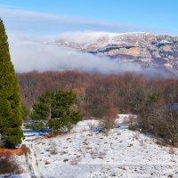 Секвойя, горы и снег :: Николай Казачёк