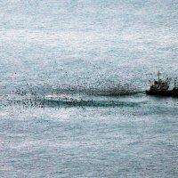 Январь, море, сети, птицы, рыба,холод,зима... :: Ирина Серова
