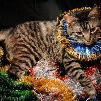 Новогодний котик :: Наталия Квас