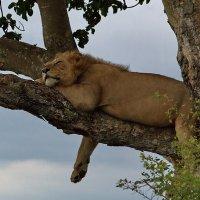 Когда я сплю, я всех люблю.)) :: Евгений Печенин