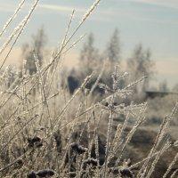 Утро, заморозки :: Максим Есменов