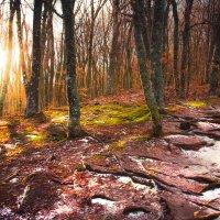 Рассвет в лесу ожидавшего снег :: Солнечная Лисичка =Дашка Скугарева