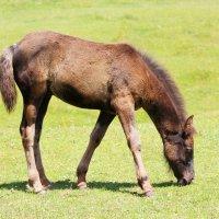 маленькая лошадка :: Natalya секрет