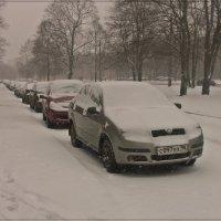 Питерская зима :: muh5257