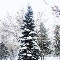 Ель нарядилась к новому году . :: Мила Бовкун