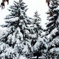 Тёмный лес , что шапкой принакрылся чудной и заснул под нею крепко , непробудно . :: Мила Бовкун