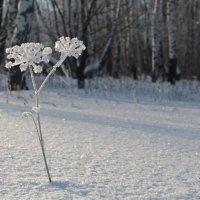 Зимний цветок :: Андрей Синявин