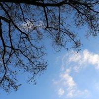 Небо :: Tatiana Zabotina