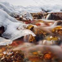 Течение зимы :: Евгений Мезенцев