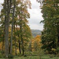 Окружающий лесопарк. Сигулда :: Gennadiy Karasev