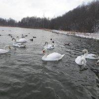 Январское озеро... :: BoxerMak Mak