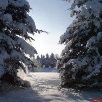 Зимняя сказка :: Светлана Олейник