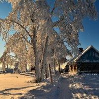 Зимний день :: Светлана Мякотникова